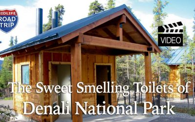 Sweet Smelling Toilets in Denali National Park