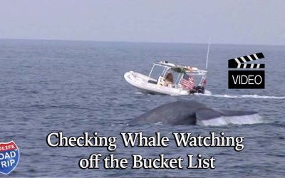 Checking Whale Watching off the Bucket List