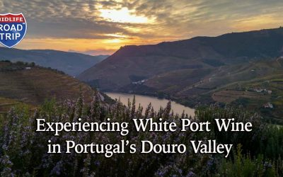 Experiencing White Port Wine in Portugal's Douro Valley