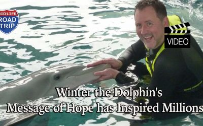 Winter the Dolphin's Message of Hope has Inspired Millions