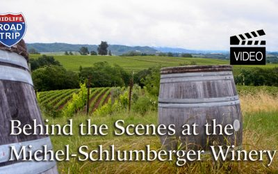 Behind the Scenes at the Michel-Schlumberger Winery