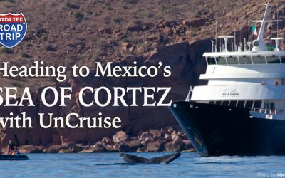 Heading to Mexico's Sea of Cortez with Uncruise