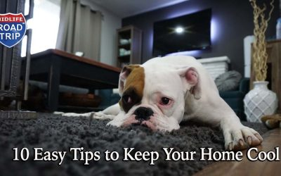 10 Easy Tips to Keep Your Home Cool